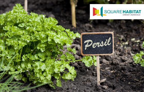 Square Habitat vous offre des graines de Persil